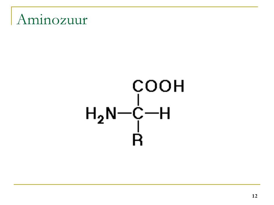 12 Aminozuur