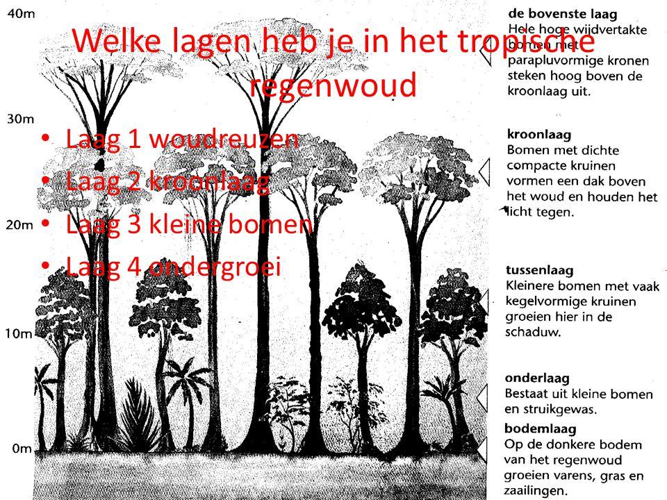 Welke lagen heb je in het tropische regenwoud Laag 1 woudreuzen Laag 2 kroonlaag Laag 3 kleine bomen Laag 4 ondergroei