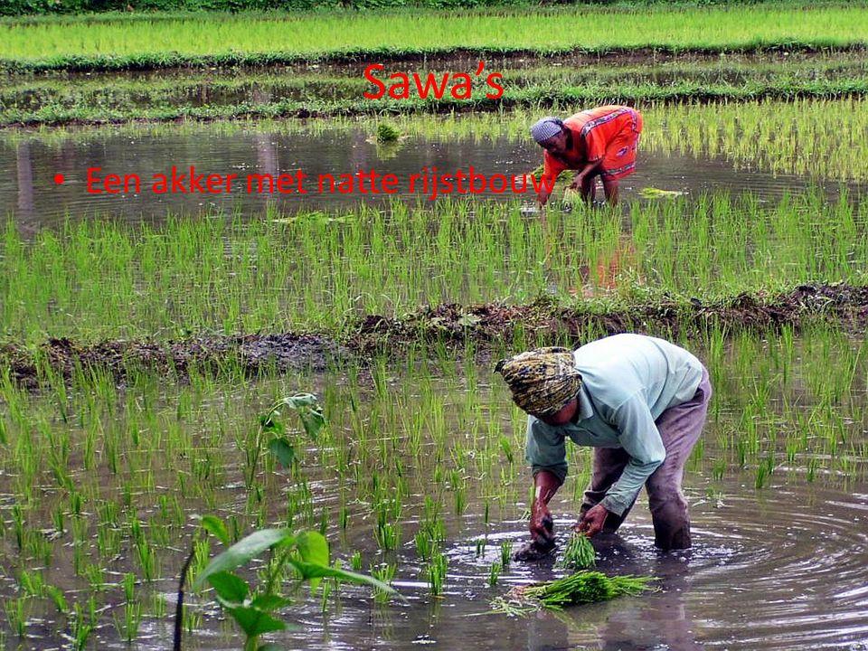 Sawa's Een akker met natte rijstbouw