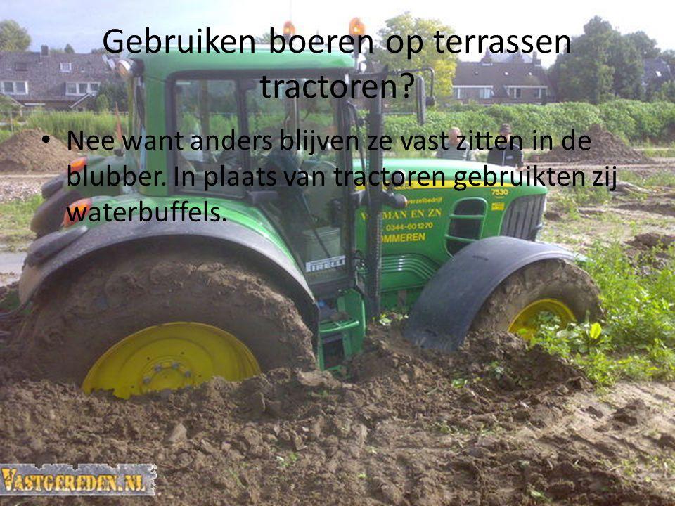 Gebruiken boeren op terrassen tractoren? Nee want anders blijven ze vast zitten in de blubber. In plaats van tractoren gebruikten zij waterbuffels.