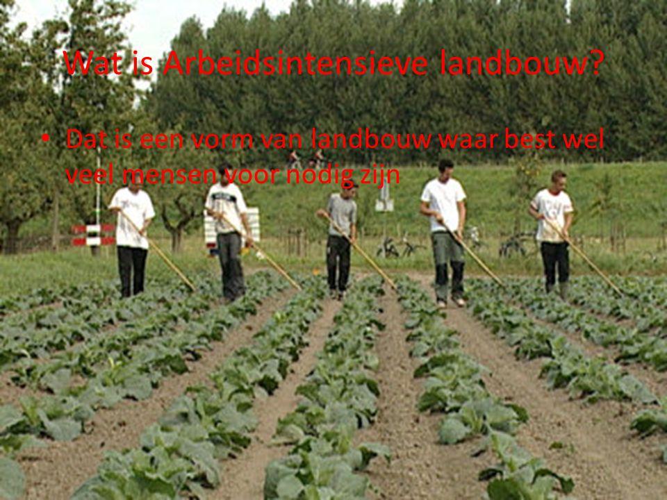 Wat is Arbeidsintensieve landbouw? Dat is een vorm van landbouw waar best wel veel mensen voor nodig zijn