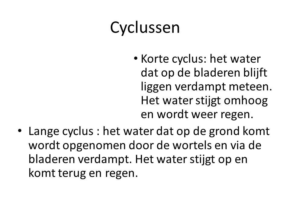 Cyclussen Korte cyclus: het water dat op de bladeren blijft liggen verdampt meteen. Het water stijgt omhoog en wordt weer regen. Lange cyclus : het wa