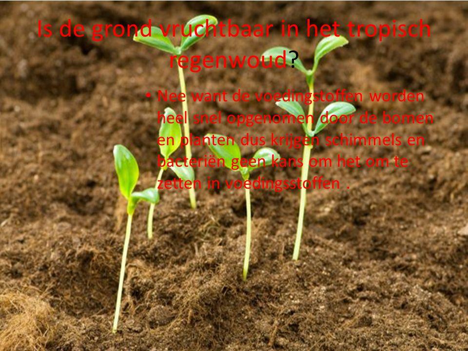 Is de grond vruchtbaar in het tropisch regenwoud? Nee want de voedingstoffen worden heel snel opgenomen door de bomen en planten dus krijgen schimmels
