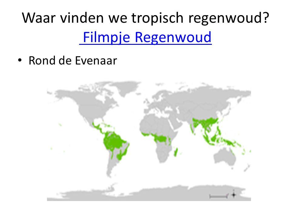 Waar vinden we tropisch regenwoud? Filmpje Regenwoud Filmpje Regenwoud Rond de Evenaar