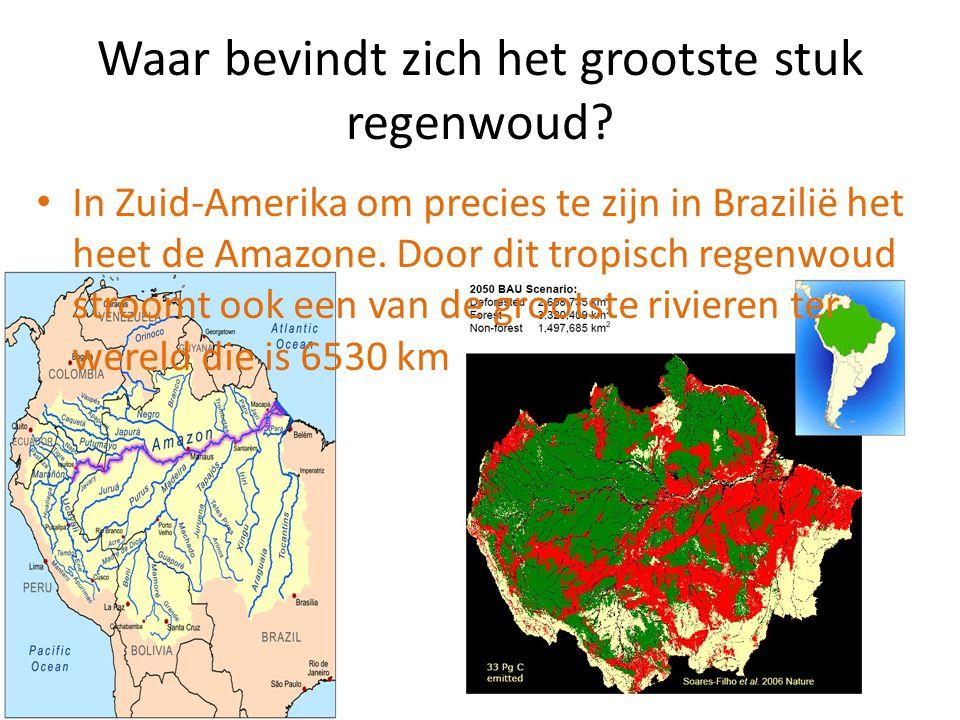 Waar bevindt zich het grootste stuk regenwoud? In Zuid-Amerika om precies te zijn in Brazilië het heet de Amazone. Door dit tropisch regenwoud stroomt