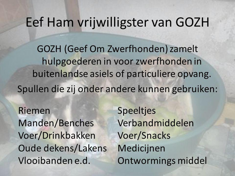 Eef Ham vrijwilligster van GOZH GOZH (Geef Om Zwerfhonden) zamelt hulpgoederen in voor zwerfhonden in buitenlandse asiels of particuliere opvang. Spul
