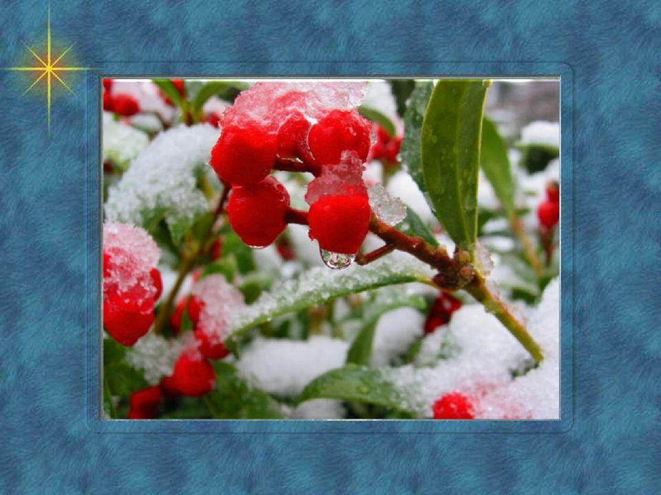 Achter deurtje eenentwintig ligt er vriendschap , en bij tweeëntwintig tolerantie , drieëntwintig staat voor innerlijke vrede op nummer vierentwintig schittert de kerstboom in al zijn glorie.