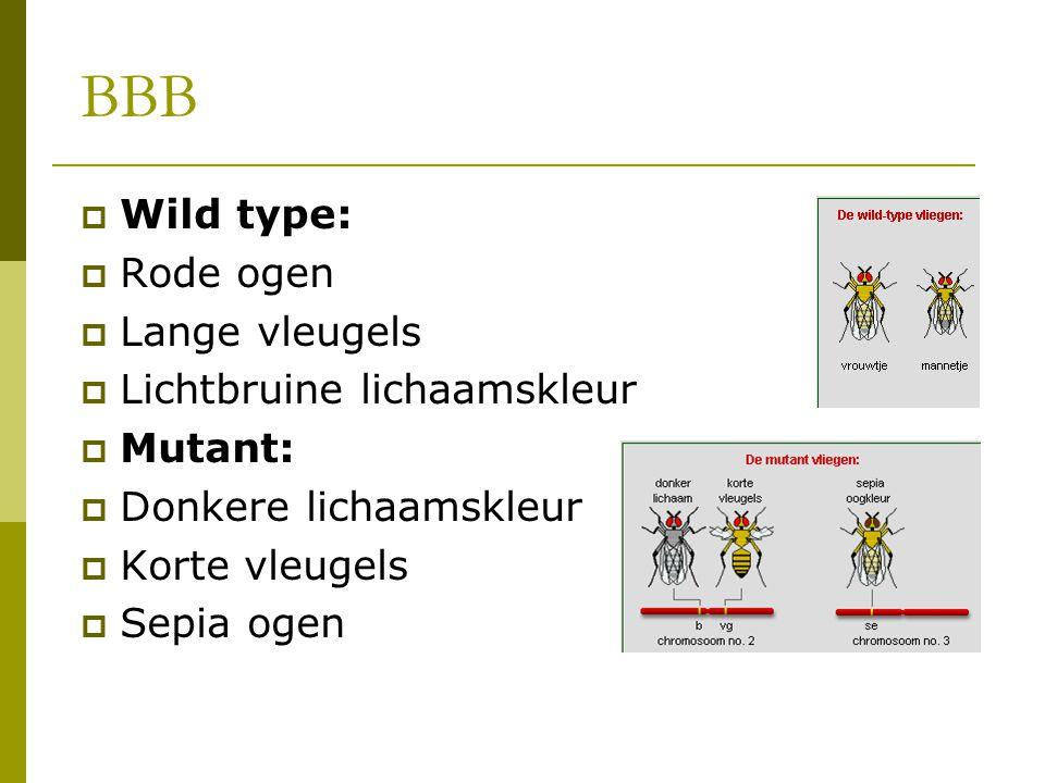 BBB  Wild type:  Rode ogen  Lange vleugels  Lichtbruine lichaamskleur  Mutant:  Donkere lichaamskleur  Korte vleugels  Sepia ogen