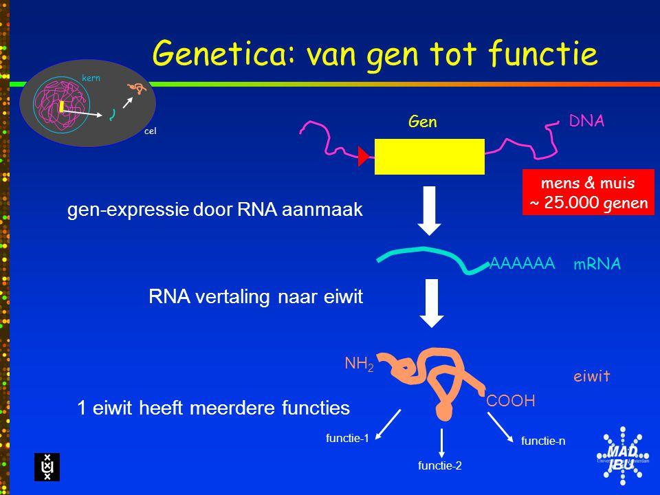 IBU Genetica: van gen tot functie Gen DNA NH 2 COOH eiwit mRNA AAAAAA cel kern gen-expressie door RNA aanmaak RNA vertaling naar eiwit functie-2 functie-1 functie-n 1 eiwit heeft meerdere functies mens & muis ~ 25.000 genen