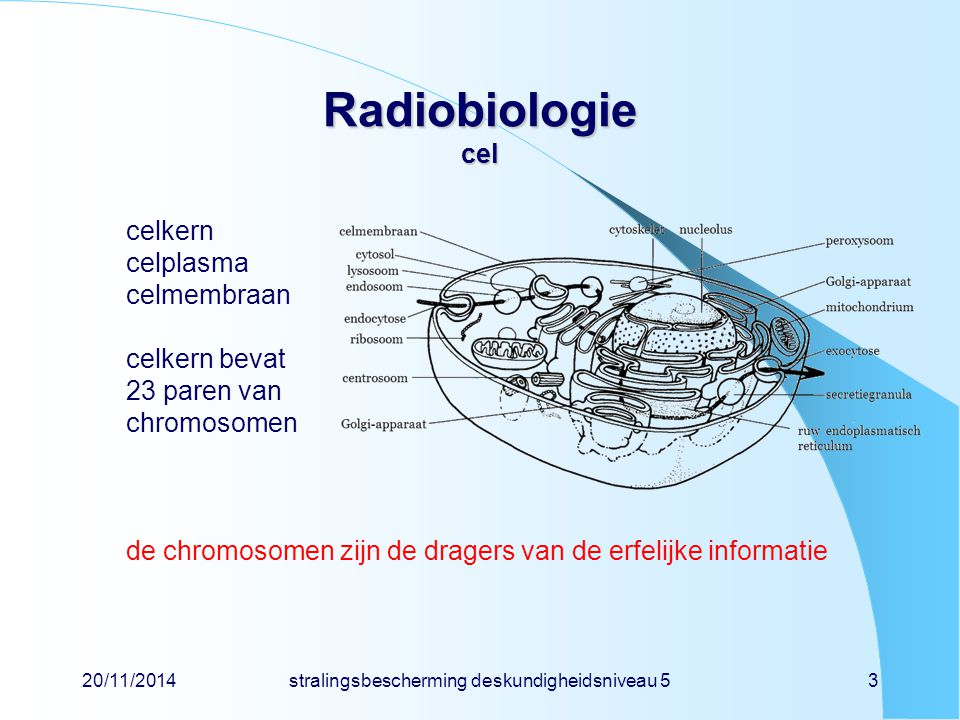 20/11/2014stralingsbescherming deskundigheidsniveau 53 Radiobiologie cel celkern celplasma celmembraan celkern bevat 23 paren van chromosomen de chromosomen zijn de dragers van de erfelijke informatie