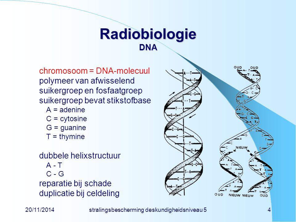 20/11/2014stralingsbescherming deskundigheidsniveau 54 Radiobiologie DNA chromosoom = DNA-molecuul polymeer van afwisselend suikergroep en fosfaatgroep suikergroep bevat stikstofbase A = adenine C = cytosine G = guanine T = thymine dubbele helixstructuur A - T C - G reparatie bij schade duplicatie bij celdeling