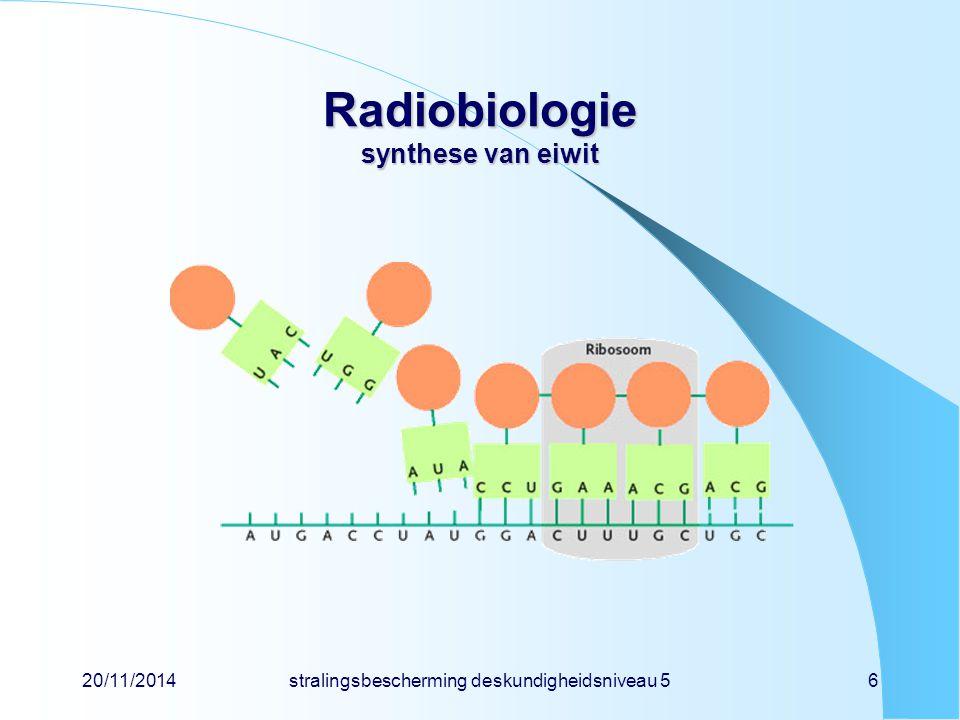 20/11/2014stralingsbescherming deskundigheidsniveau 56 Radiobiologie synthese van eiwit