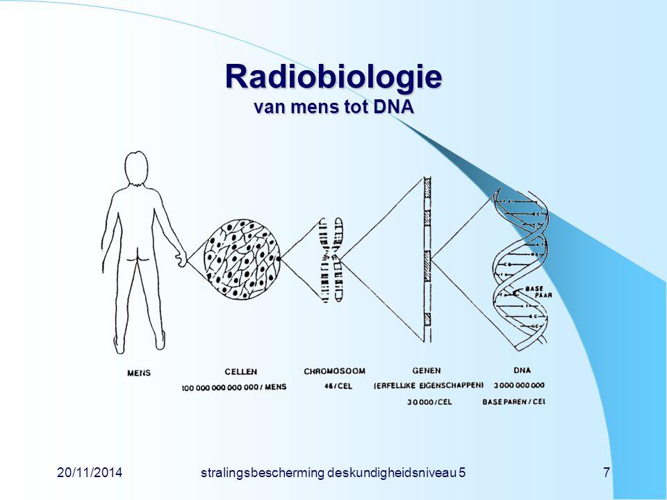 20/11/2014stralingsbescherming deskundigheidsniveau 58 Radiobiologie stralingsschade directe schade door ionisatie van biomoleculen koolhydraat, eiwit, vet, DNA,...