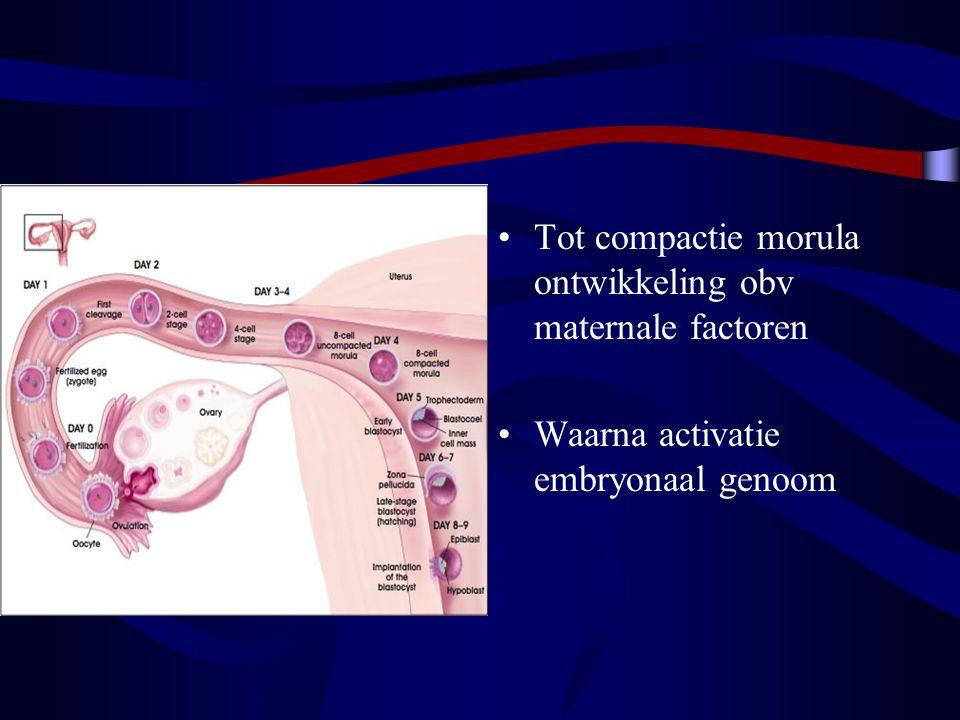 Expressie embryonale genen Meeste proteïnen in het embryo vóór de implantatie –essentiële rol bij basisfuncties van de cel –vormen van intercellulaire contacten Andere proteïnen via genen die pas tot expressie komen na de activatie van het embryonaal genoom –groeifactor b1, die een rol speelt bij celmigratie en –proliferatie.