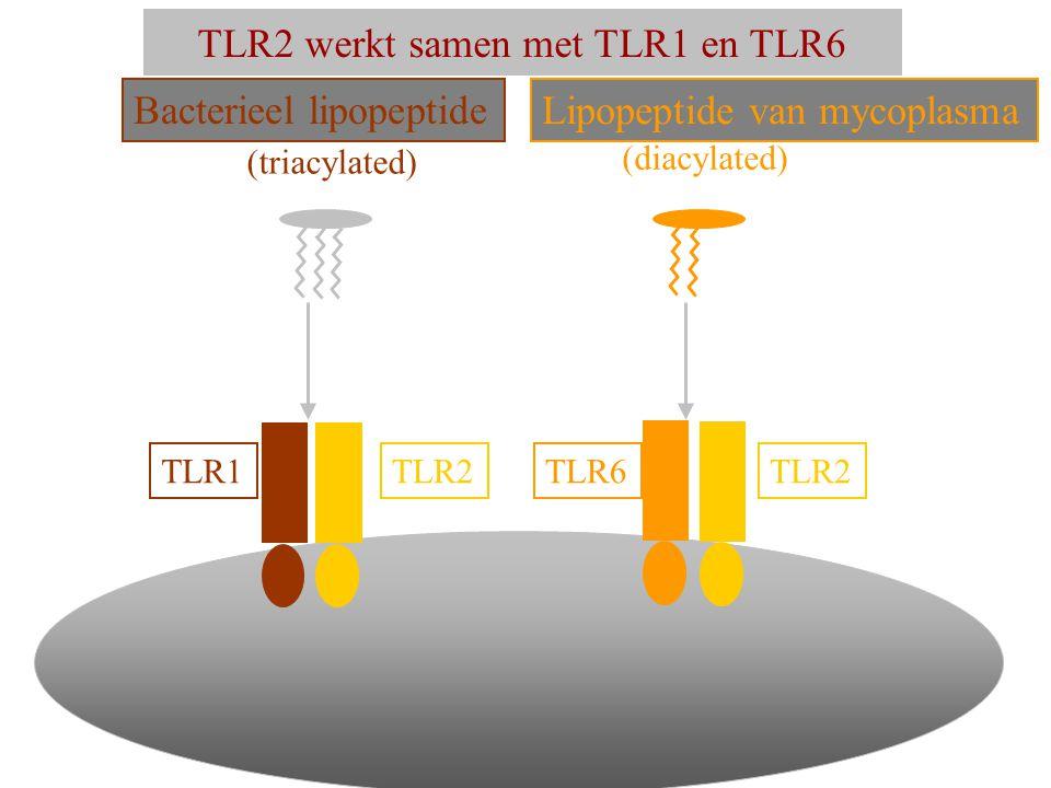 TLR2 werkt samen met TLR1 en TLR6 TLR2 TLR1TLR6 Bacterieel lipopeptide Lipopeptide van mycoplasma (triacylated) (diacylated)
