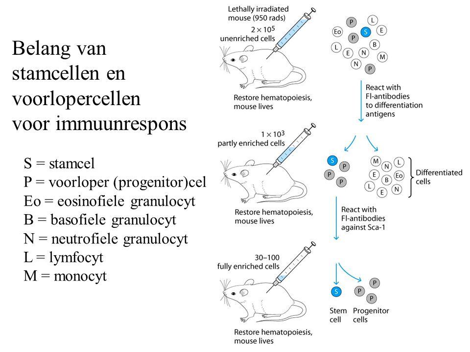 Belang van stamcellen en voorlopercellen voor immuunrespons S = stamcel P = voorloper (progenitor)cel Eo = eosinofiele granulocyt B = basofiele granulocyt N = neutrofiele granulocyt L = lymfocyt M = monocyt