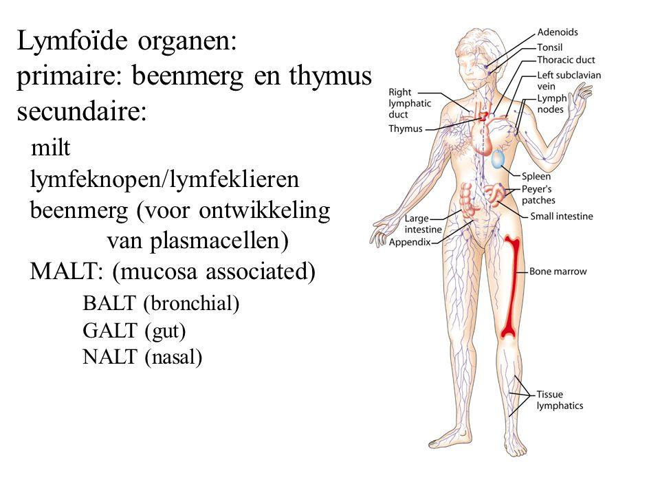 Lymfoïde organen: primaire: beenmerg en thymus secundaire: milt lymfeknopen/lymfeklieren beenmerg (voor ontwikkeling van plasmacellen) MALT: (mucosa associated) BALT (bronchial) GALT (gut) NALT (nasal)