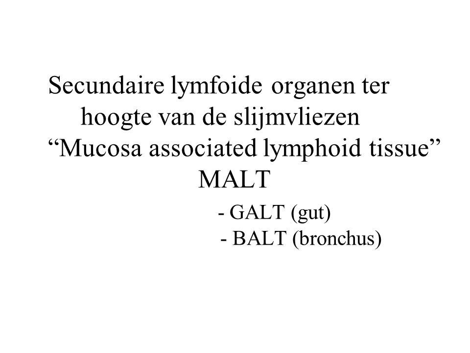 """Secundaire lymfoide organen ter hoogte van de slijmvliezen """"Mucosa associated lymphoid tissue"""" MALT - GALT (gut) - BALT (bronchus)"""