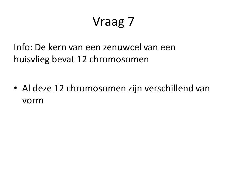 Vraag 7 Info: De kern van een zenuwcel van een huisvlieg bevat 12 chromosomen Al deze 12 chromosomen zijn verschillend van vorm