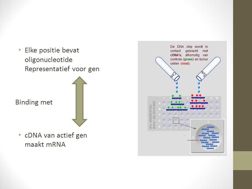 Elke positie bevat oligonucleotide Representatief voor gen Binding met cDNA van actief gen maakt mRNA