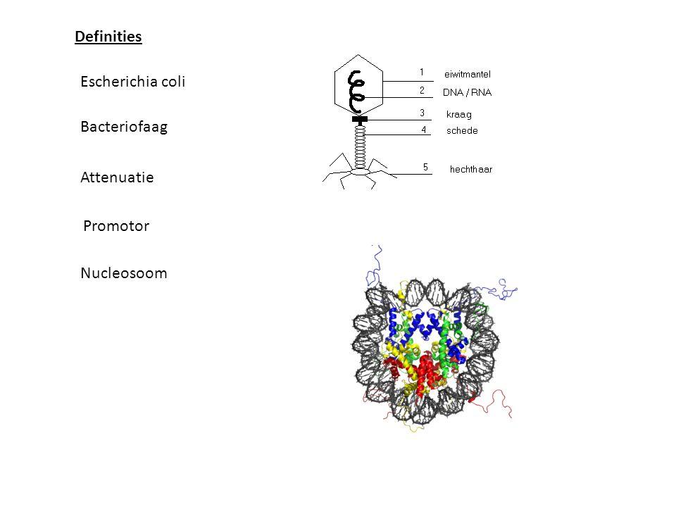 Definities Escherichia coli Bacteriofaag Nucleosoom Attenuatie Promotor