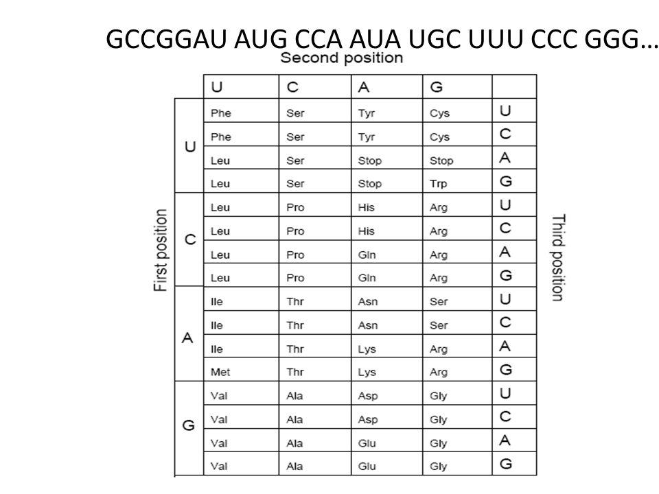 Trp Met His His Lys Leu Ser Arg Leu Arg Uit een kleine hoeveelheid van een eiwit hebt u de volgende fragmenten kunnen identificeren: Ontwerp een oligonucleotide die als probe kan dienen om het mRNA dat voor dit eiwit te identificeren