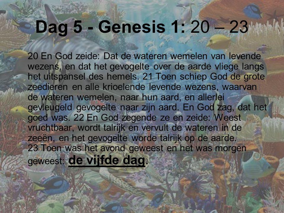Dag 5 - Genesis 1: 20 – 23 20 En God zeide: Dat de wateren wemelen van levende wezens, en dat het gevogelte over de aarde vliege langs het uitspansel des hemels.