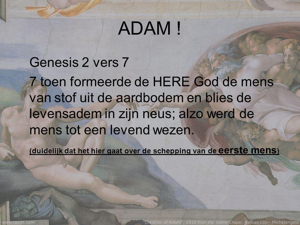 ADAM .