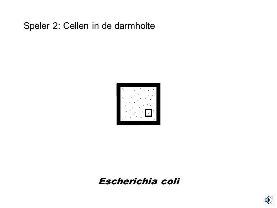 Darmdoorsnede Speler 2: Cellen in de darm Deel darmholte