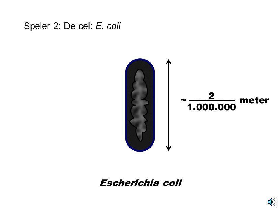 Speler 2: Cellen in de darmholte Deel darmholte Escherichia coli