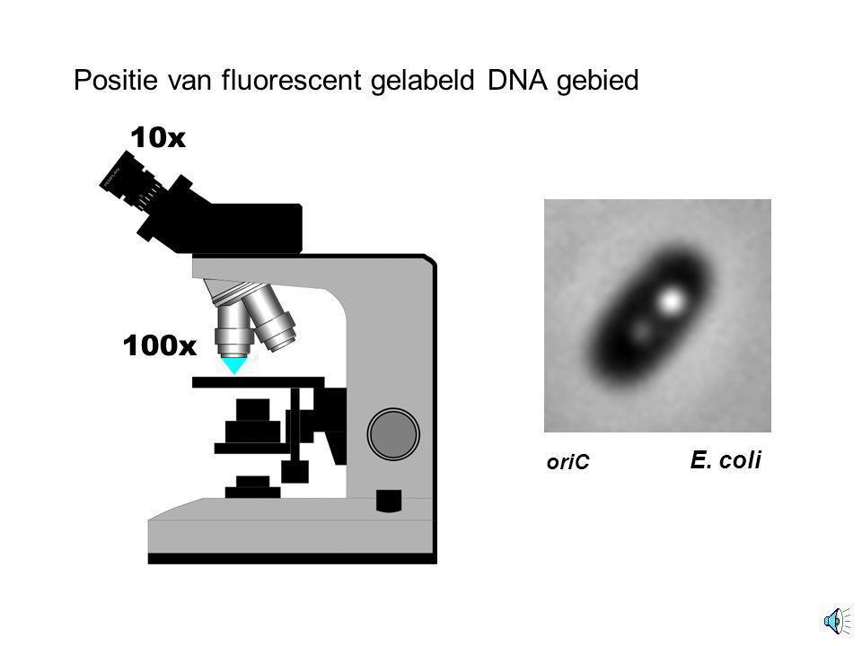 Hoe is DNA opgeslagen in de E. coli? Hoe onderzoek je dat?
