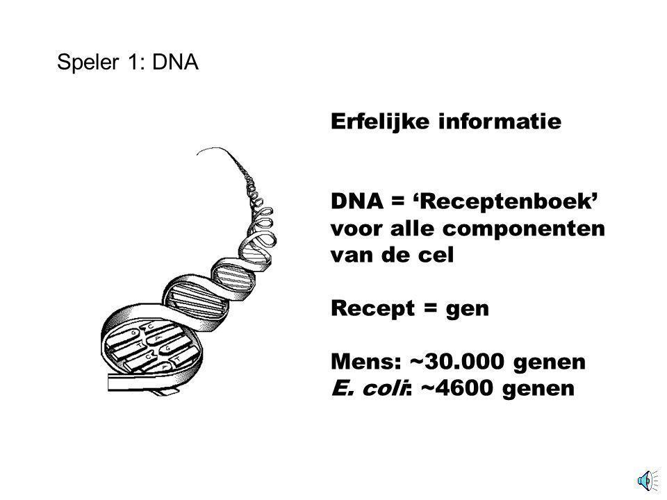 Speler 1: DNA Erfelijke informatie DNA = 'Receptenboek' voor alle componenten van de cel Recept = gen Mens: ~30.000 genen E.