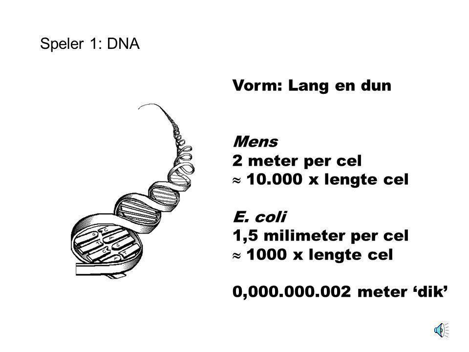 Speler 1: DNA Erfelijke informatie DNA = 'Receptenboek' voor alle componenten van de cel Recept = gen Mens: ~30.000 genen E. coli: ~4600 genen