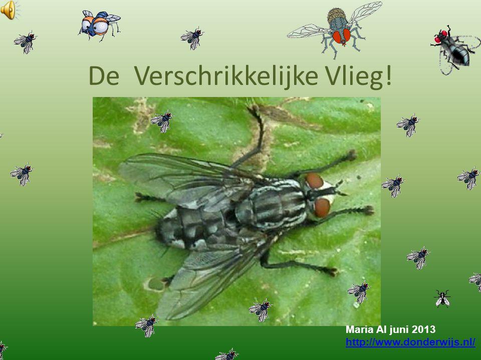 De Verschrikkelijke Vlieg! Maria Al juni 2013 http://www.donderwijs.nl/