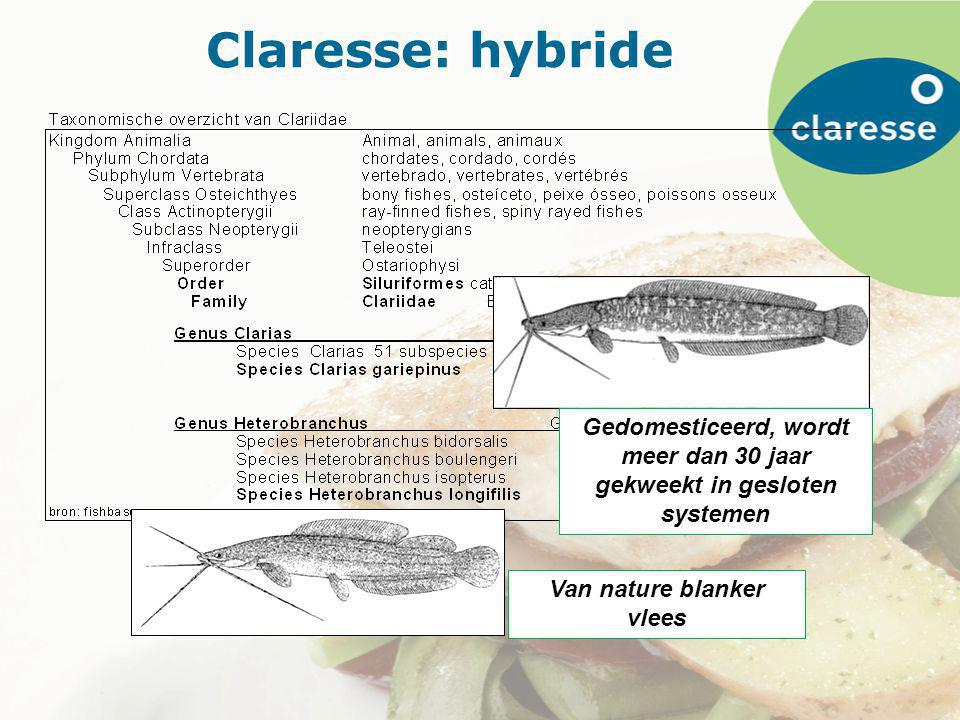 Claresse: hybride Gedomesticeerd, wordt meer dan 30 jaar gekweekt in gesloten systemen Van nature blanker vlees