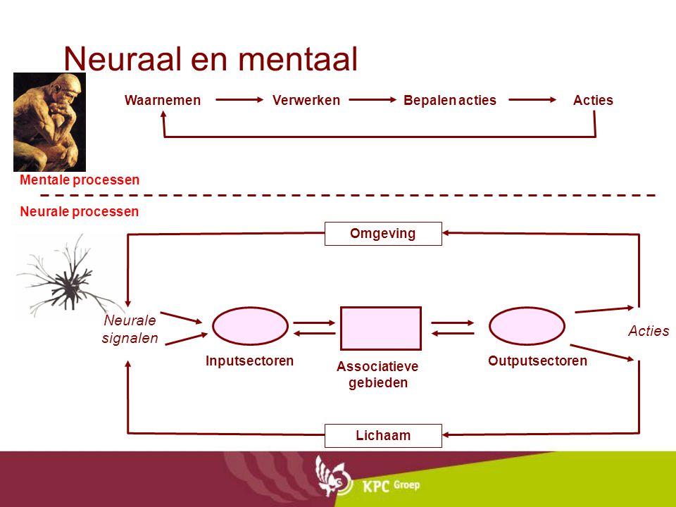 Neuraal en mentaal Lichaam Omgeving Inputsectoren Associatieve gebieden Outputsectoren Neurale signalen Acties WaarnemenActiesBepalen actiesVerwerken Mentale processen Neurale processen