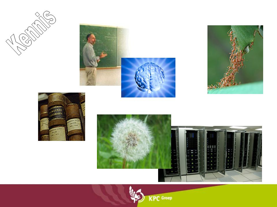 De dompteur in ons Systeem II (zoogdier) gebruikt synaptogenese en pruning om tot een steeds preciezere beleving van de omgeving te komen.
