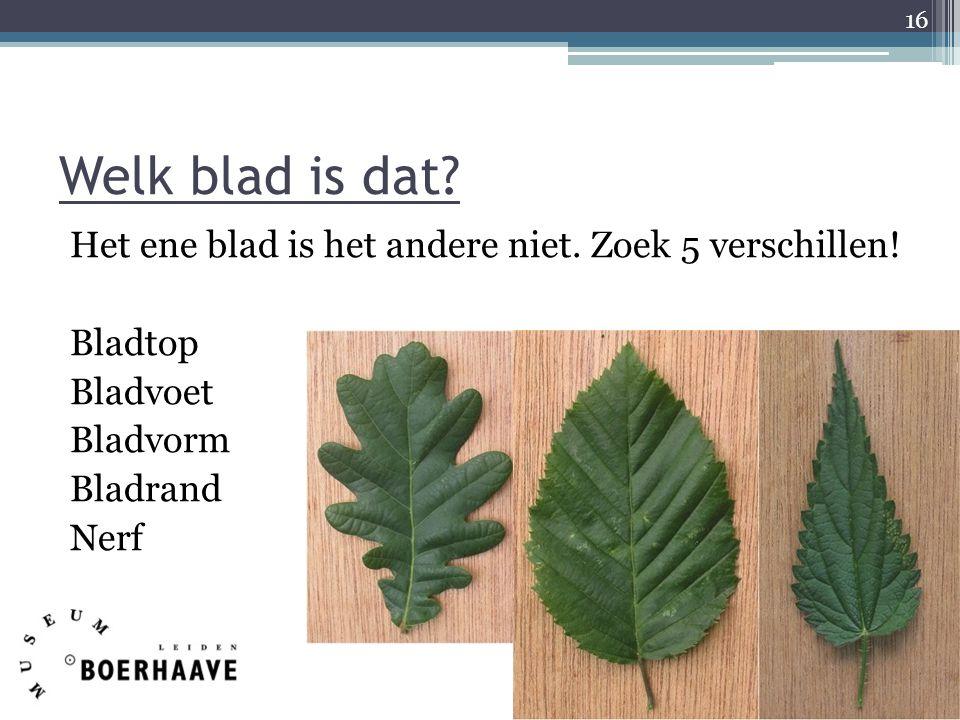 Welk blad is dat? Het ene blad is het andere niet. Zoek 5 verschillen! Bladtop Bladvoet Bladvorm Bladrand Nerf 16