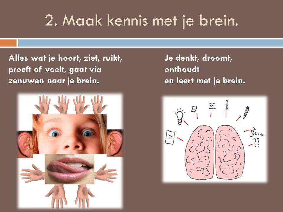 2. Maak kennis met je brein. Alles wat je hoort, ziet, ruikt, proeft of voelt, gaat via zenuwen naar je brein. Je denkt, droomt, onthoudt en leert met