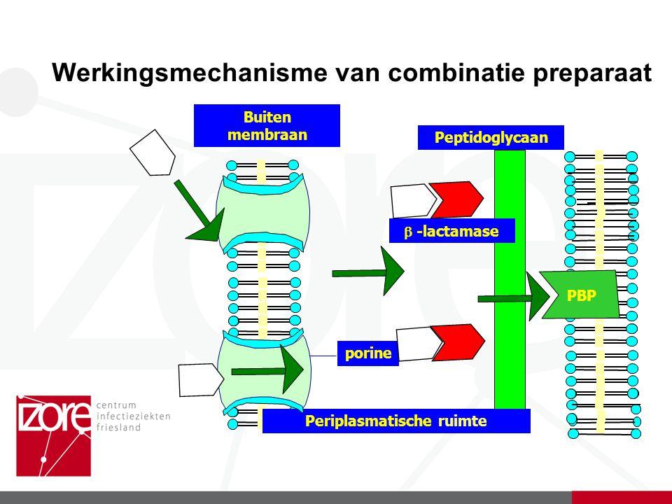 Werkingsmechanisme van combinatie preparaat Peptidoglycaan Periplasmatische ruimte porine Buiten membraan  -lactamase PBP