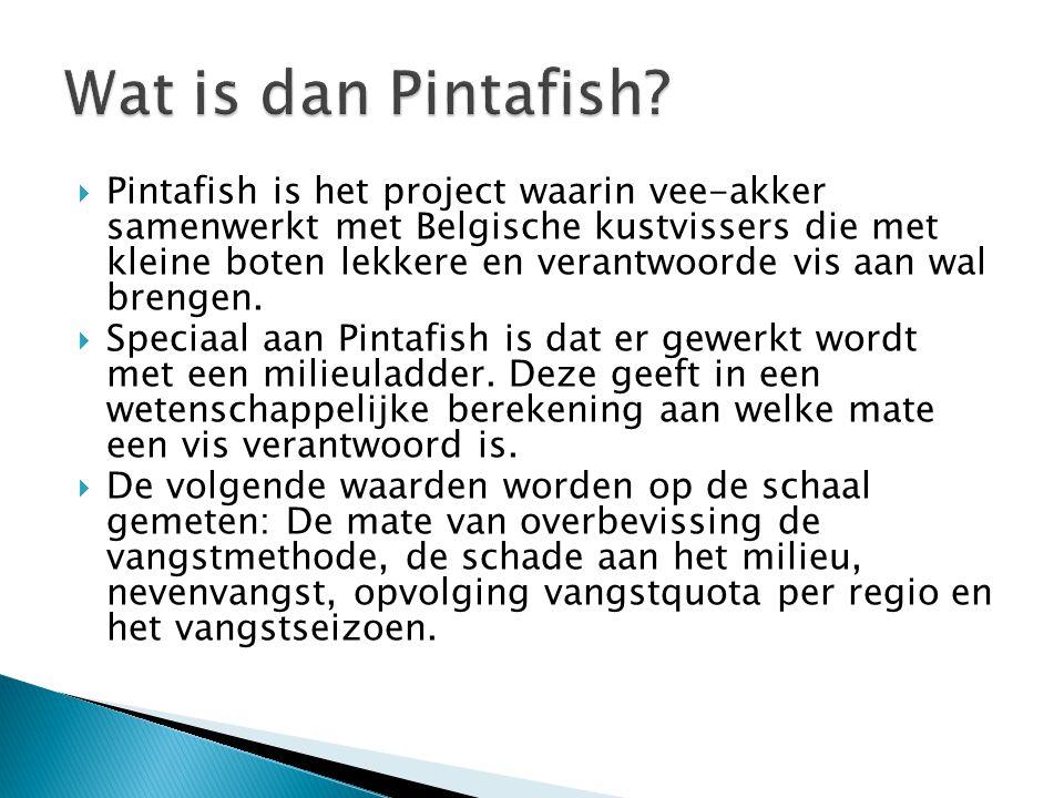  Pintafish is het project waarin vee-akker samenwerkt met Belgische kustvissers die met kleine boten lekkere en verantwoorde vis aan wal brengen.  S