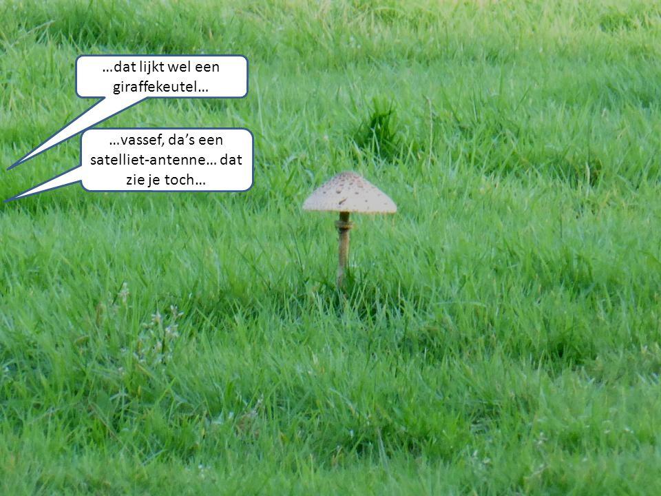 …dat lijkt wel een giraffekeutel… …vassef, da's een satelliet-antenne… dat zie je toch…