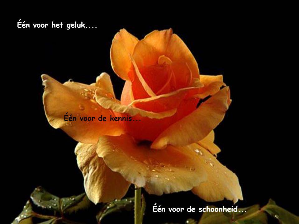 Één voor het geluk.... Één voor de kennis... Één voor de schoonheid...