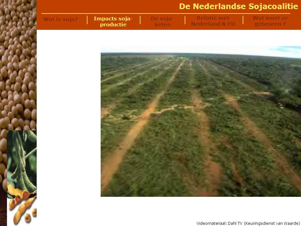 De Nederlandse Sojacoalitie Als de bulldozers hun werk gedaan hebben en het bos vernietigd hebben......