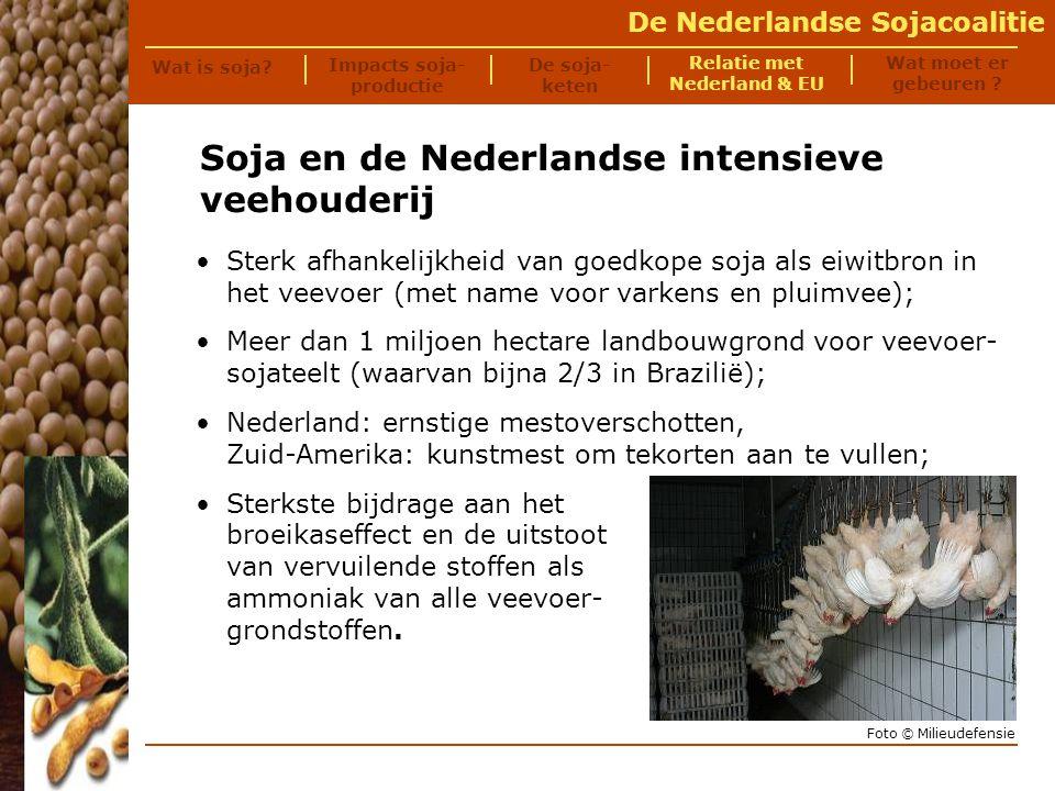 De Nederlandse Sojacoalitie We importeren voer, exporteren varkens en houden de rommel hier.