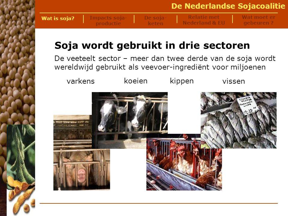 De Nederlandse Sojacoalitie De soja- keten Relatie met Nederland & EU Wat is soja.