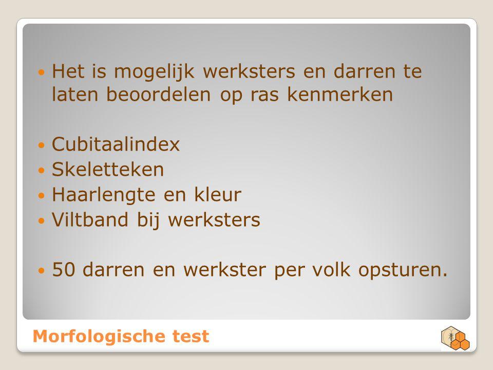Morfologische test Het is mogelijk werksters en darren te laten beoordelen op ras kenmerken Cubitaalindex Skeletteken Haarlengte en kleur Viltband bij