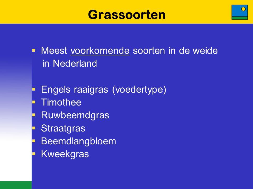 Grassoorten  Meest voorkomende soorten in de weide in Nederland  Engels raaigras (voedertype)  Timothee  Ruwbeemdgras  Straatgras  Beemdlangbloe