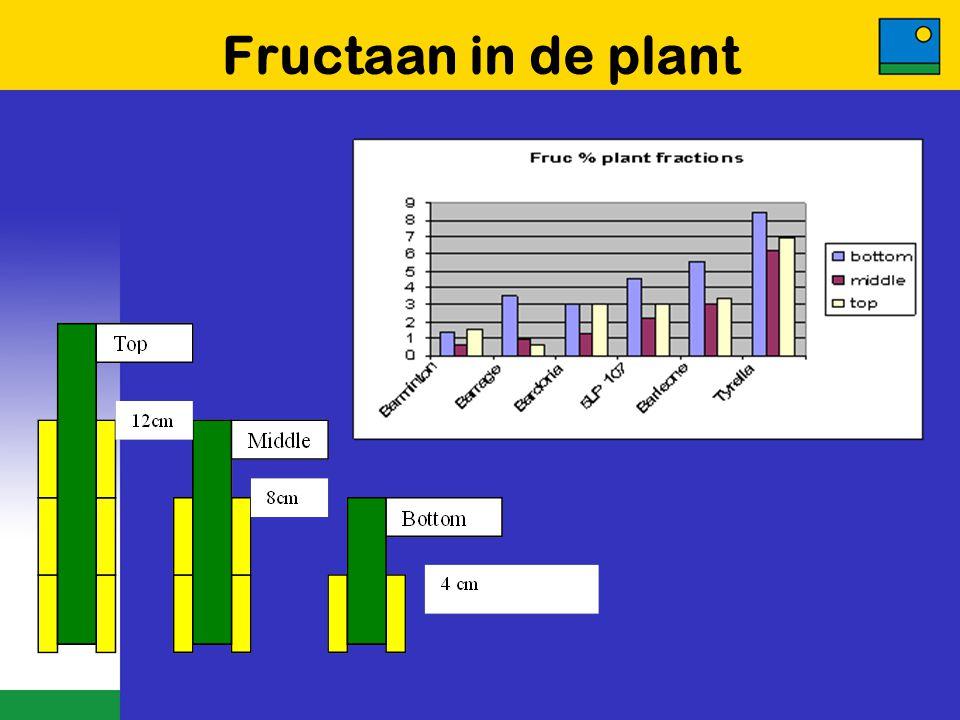 Fructaan in de plant