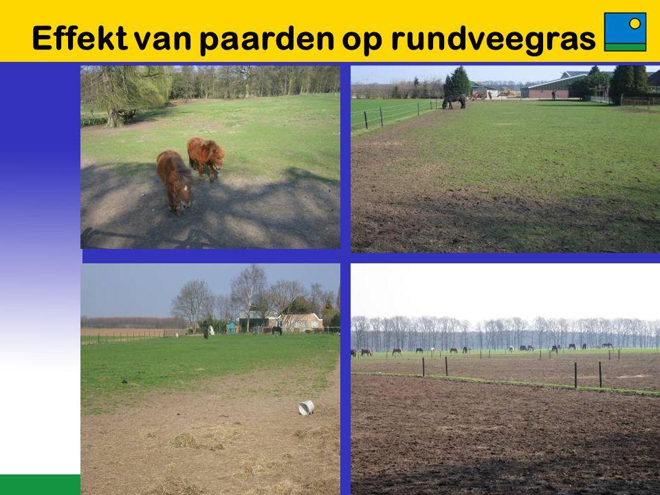 Fructaanonderzoek Barenbrug  Er bestaan rasverschillen binnen Engels raaigras  Barenbrug screent grassen bestemd voor paardenweidemengsels op fructaangehalte